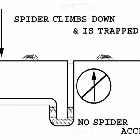 A diagram showing spiders do not crawl up the house drains