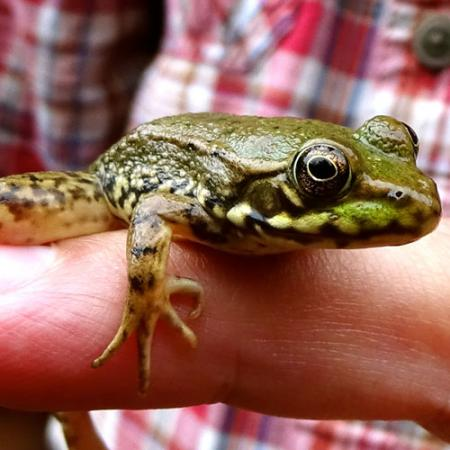 A small green frog with black splotches is held by a pair of hands