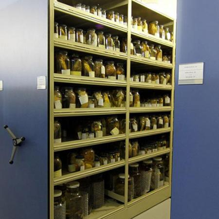 open shelves within the fish collection