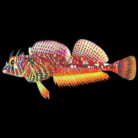 colorful illustrated fish