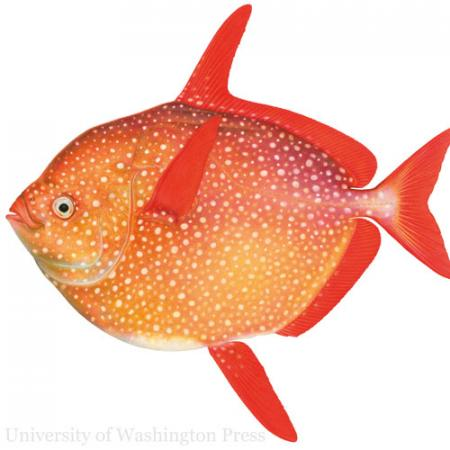 an illustrated fish
