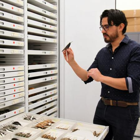 Alejandro Rico-Guevara talks about collections at the Burke Museum.