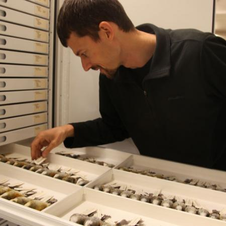 A male reseracher opening a collections drawer containing collected bird