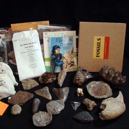 fossils box contents