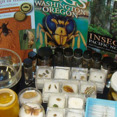 insects burke box contents