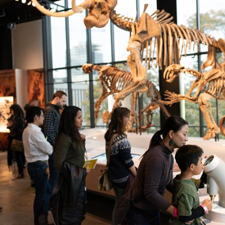 People looking at a sabertooth cat and giant sloth fossil