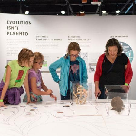 a family looks at various skulls in a case in the exhibits