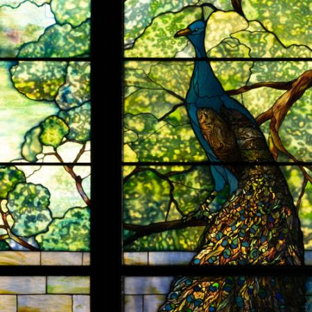 close up of peacock in the tiffany window