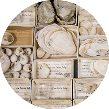 fossil shells in small museum storage boxes