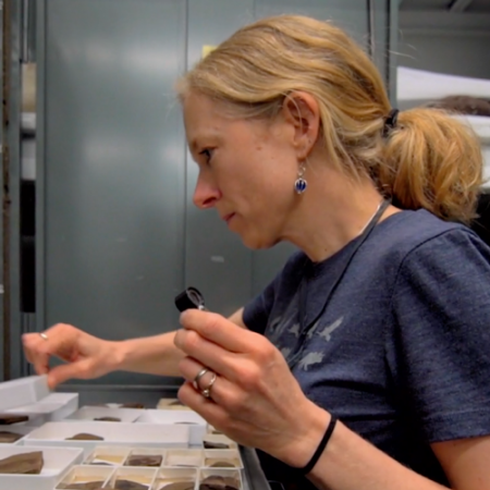 caroline stromberg looks at fossil plant specimens in an open drawer