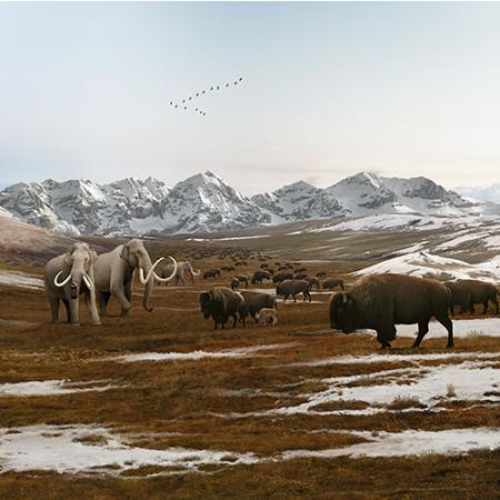 An Ice Age scene depicting Columbian mammoths and early buffalo in an icy tundra.