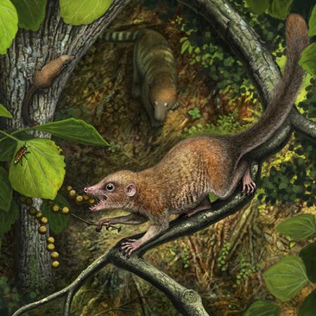A lifelike rendering of a small mammal eating insects in the trees