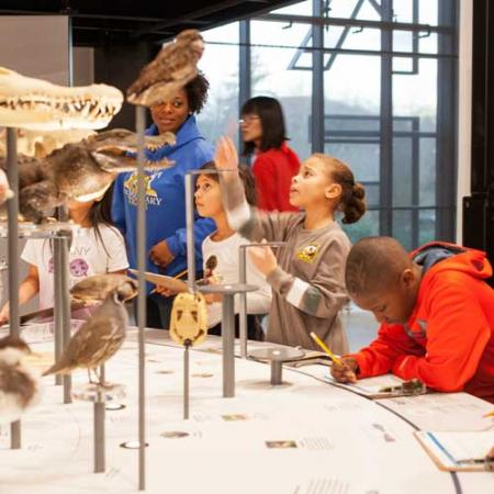 children look at specimens on a cladogram during their field trip to the Burke Museum
