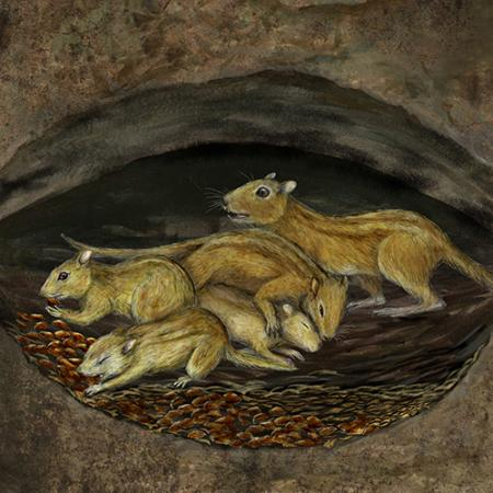 A group of rodent-like mammals in a den